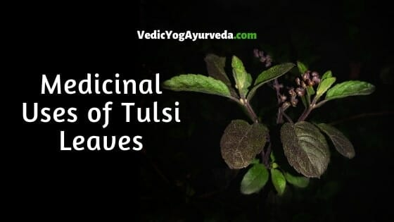 Medicinal Uses of Tulsi Leaves